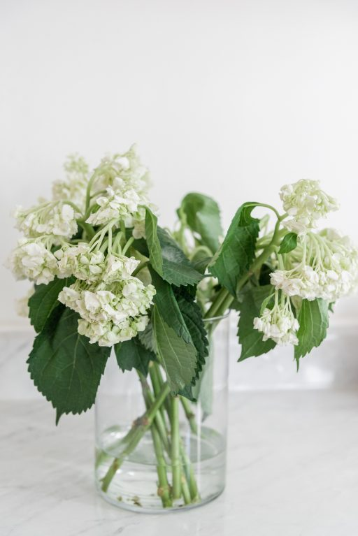 how to revive hydrangeas // cut hydrangeas wilting // hydrangeas died overnight