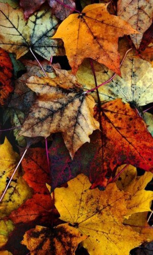 free fall wallpaper iphone, free autumn wallpaper iphone